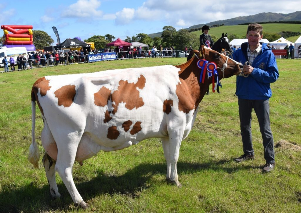 Willie Ralston, from East Drumlemble, with his dairy champion, who has had four calves. 50_c32kintyreshow49_ralston cow
