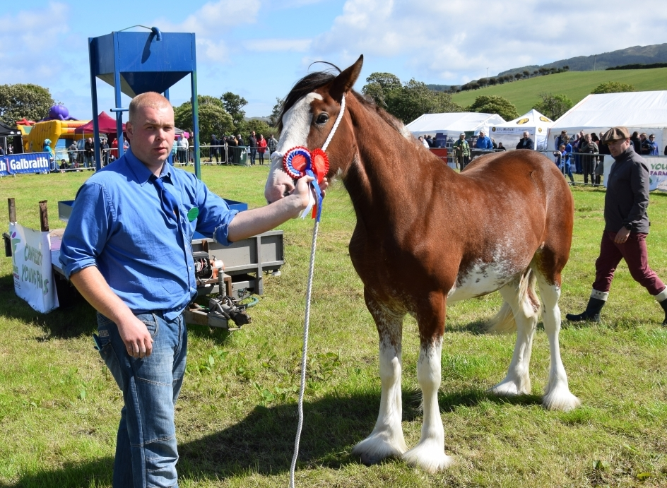 Callum MacPhail, with his champion Clydesdale, Garcalfra Sweet Jessica, a yearling filly. 50_c32kintyreshow50_macphail horse
