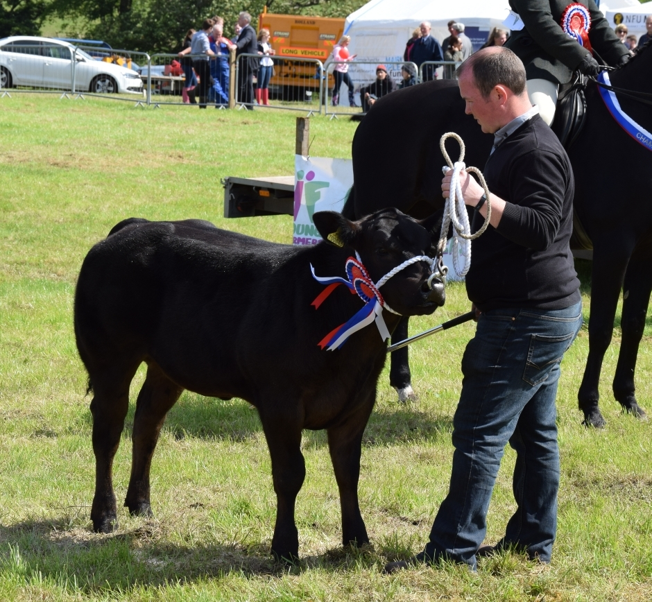 John McCallum from Strathnafanaig with his beef champion, six-month-old Black Betty. 50_c32kintyreshow51_mccallum cow