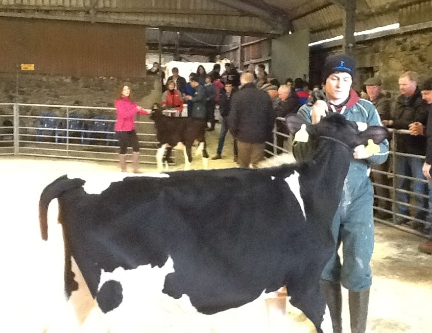 John Pirie in the ring with one of his beasts. NO_c49wintershow08_John Pirie