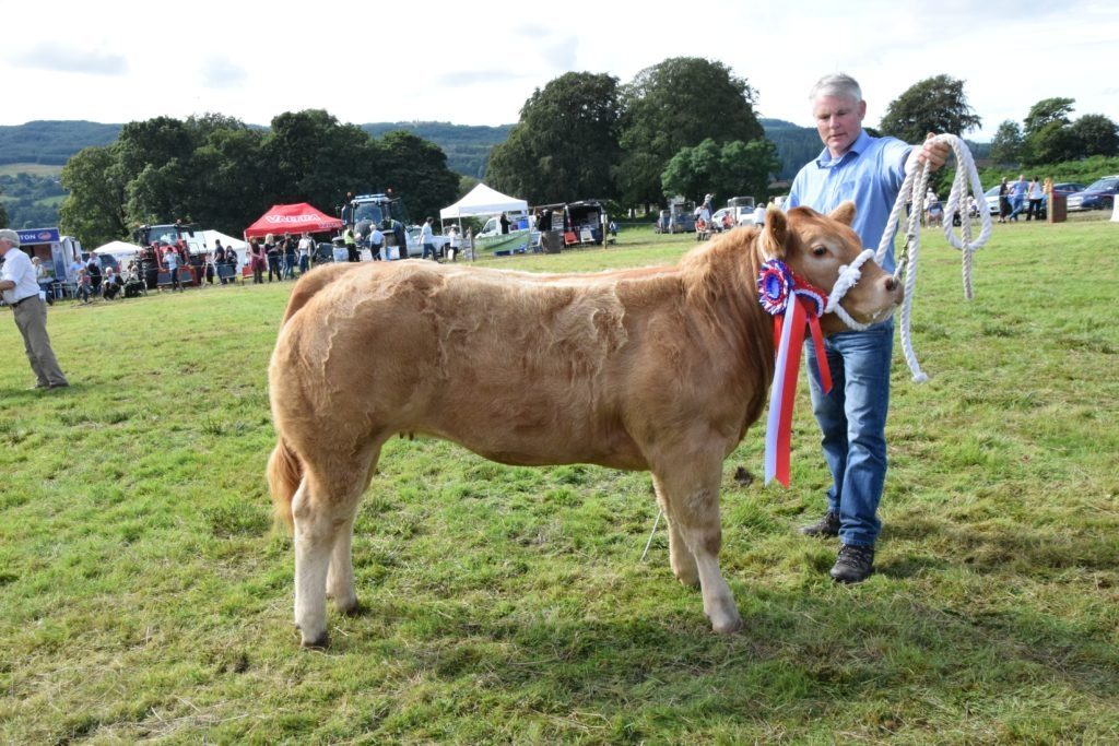 Duncan Semple, from Dippen Farm, had a successful competing in the show's cattle sections. 51_a33MAS66