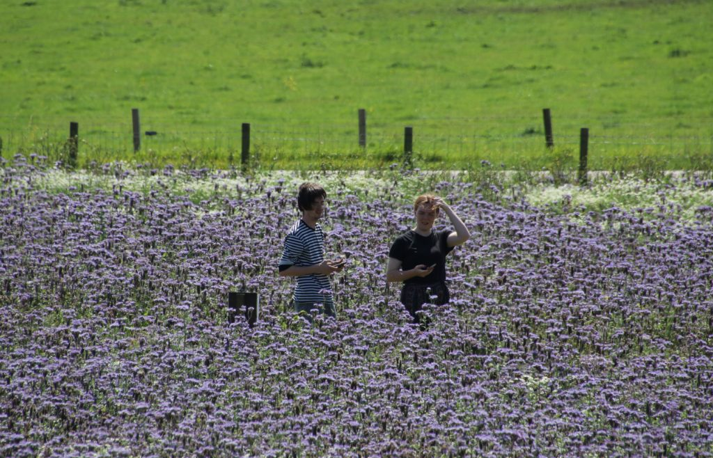 Visitors enjoyed walking through the purple field.
