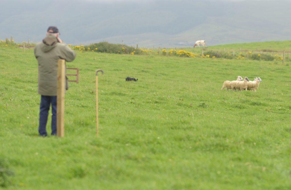 Dunoon shepherd's Kintyre success