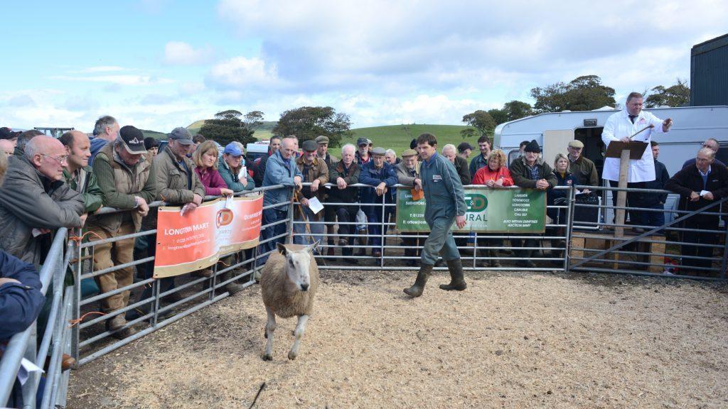 Kintyre's super sheep sale