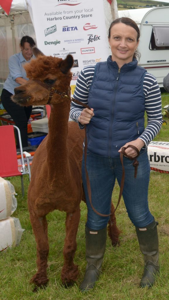 Guild members and alpacas are 'hardy beasts'