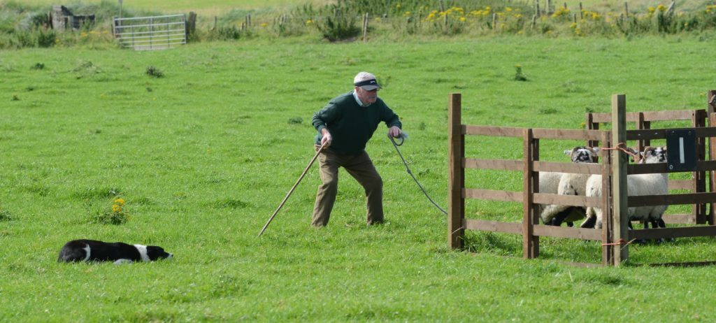 Sheepdog trials move to Ayrshire