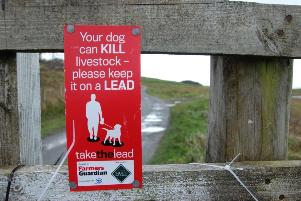Husky dogs seized as police investigate sheep attacks