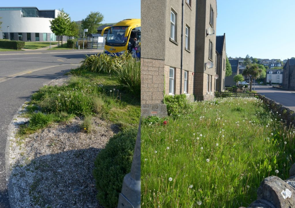 Weed warriors to tidy Campbeltown