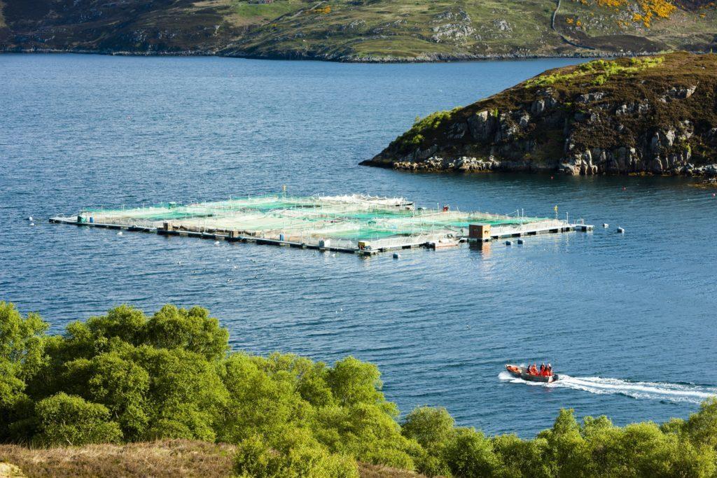 Letter: Scotland's fish farming success